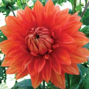 OrangeWonder