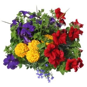 Spring plants stevens and son wholesale florist springcombo hblarge mightylinksfo