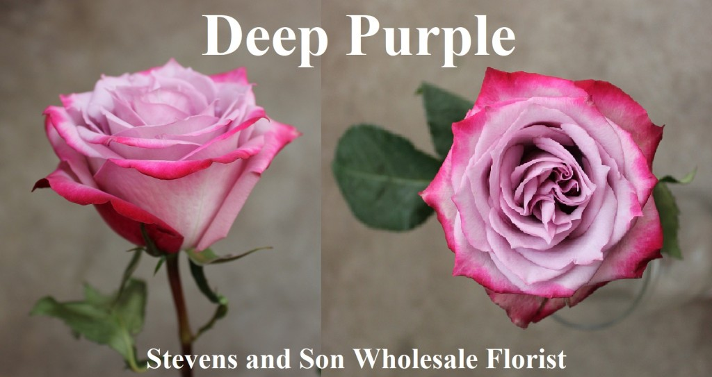 Deep Purple, Photo Credit Allison Linder