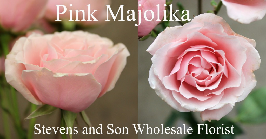 Pink Majolika - Photo Credit Allison Linder