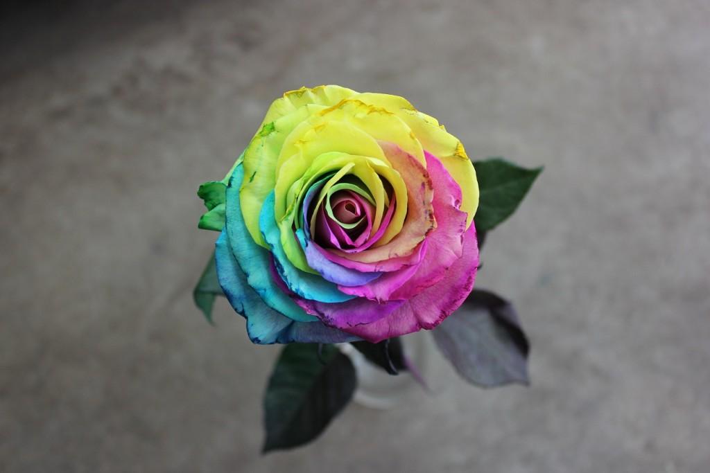 Tinted Rose - Tie Dye, Aeriel View, Photo Credit Allison Linder