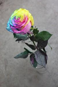 Tinted Rose - Tie Dye, Full Length, Photo Credit Allison Linder
