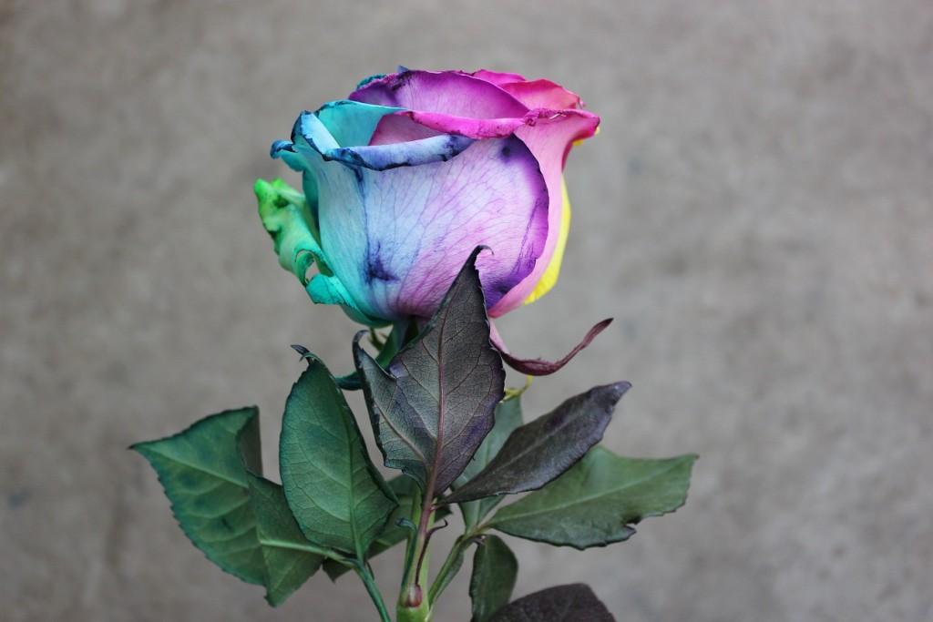 Tinted Rose - Tie Dye, Leaves, Photo Credit Allison Linder