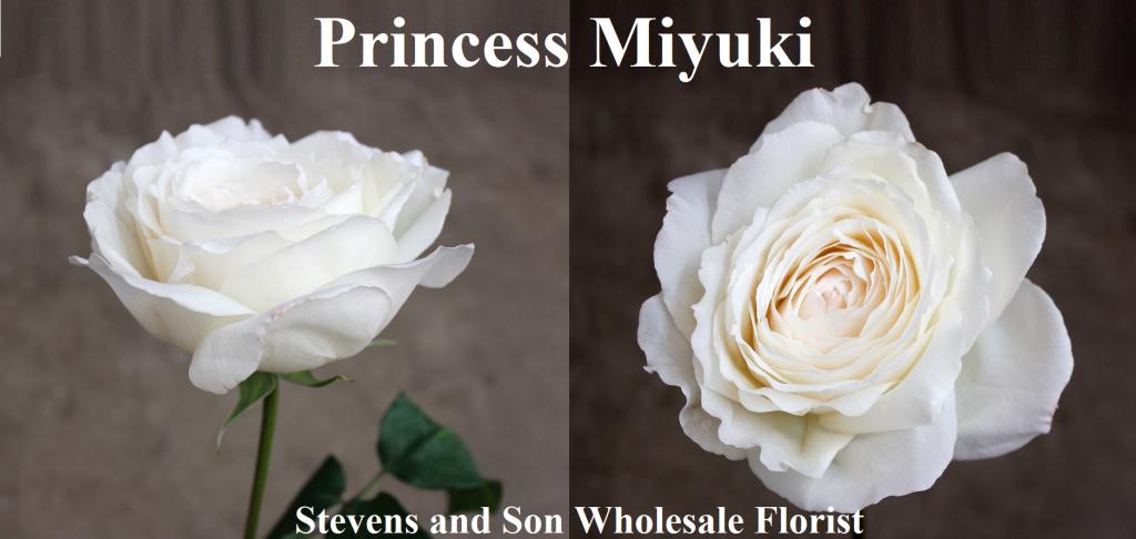Princess Miyuki Photo Credit Allison Linder