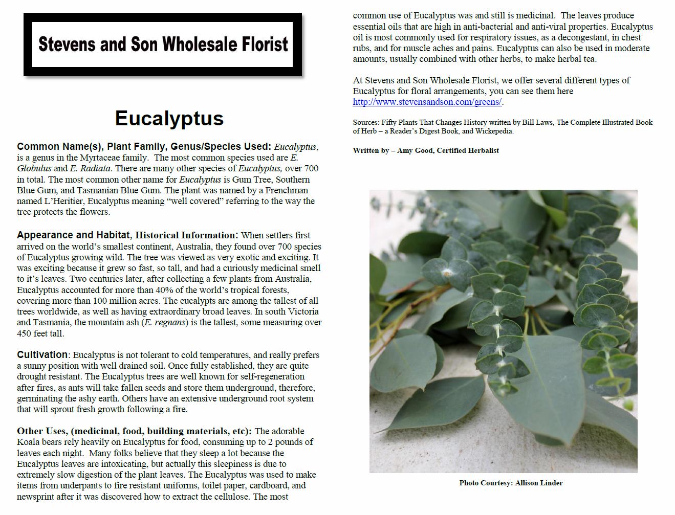 Eucalyptus Plant Monograph