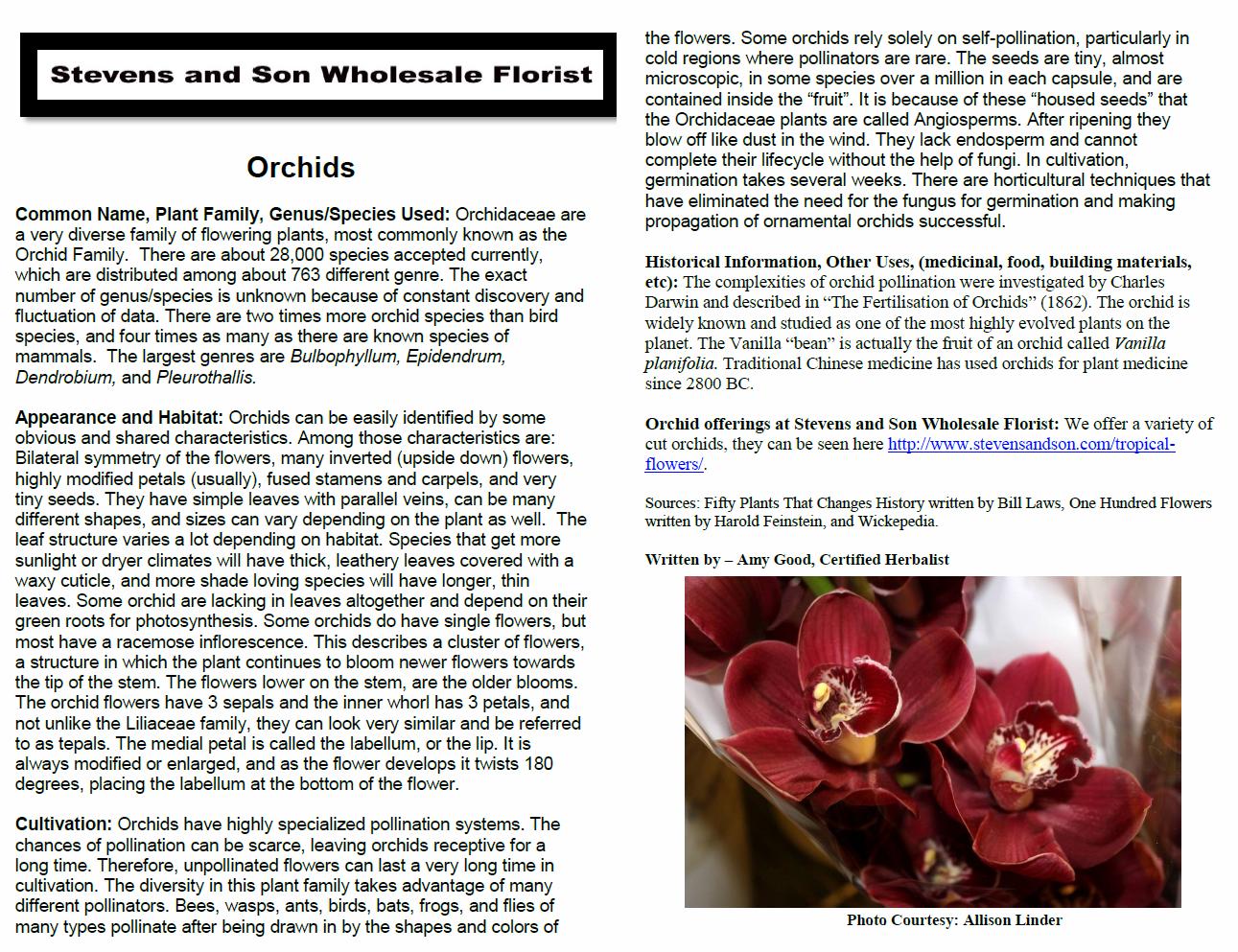 Orchid Plant Monograph