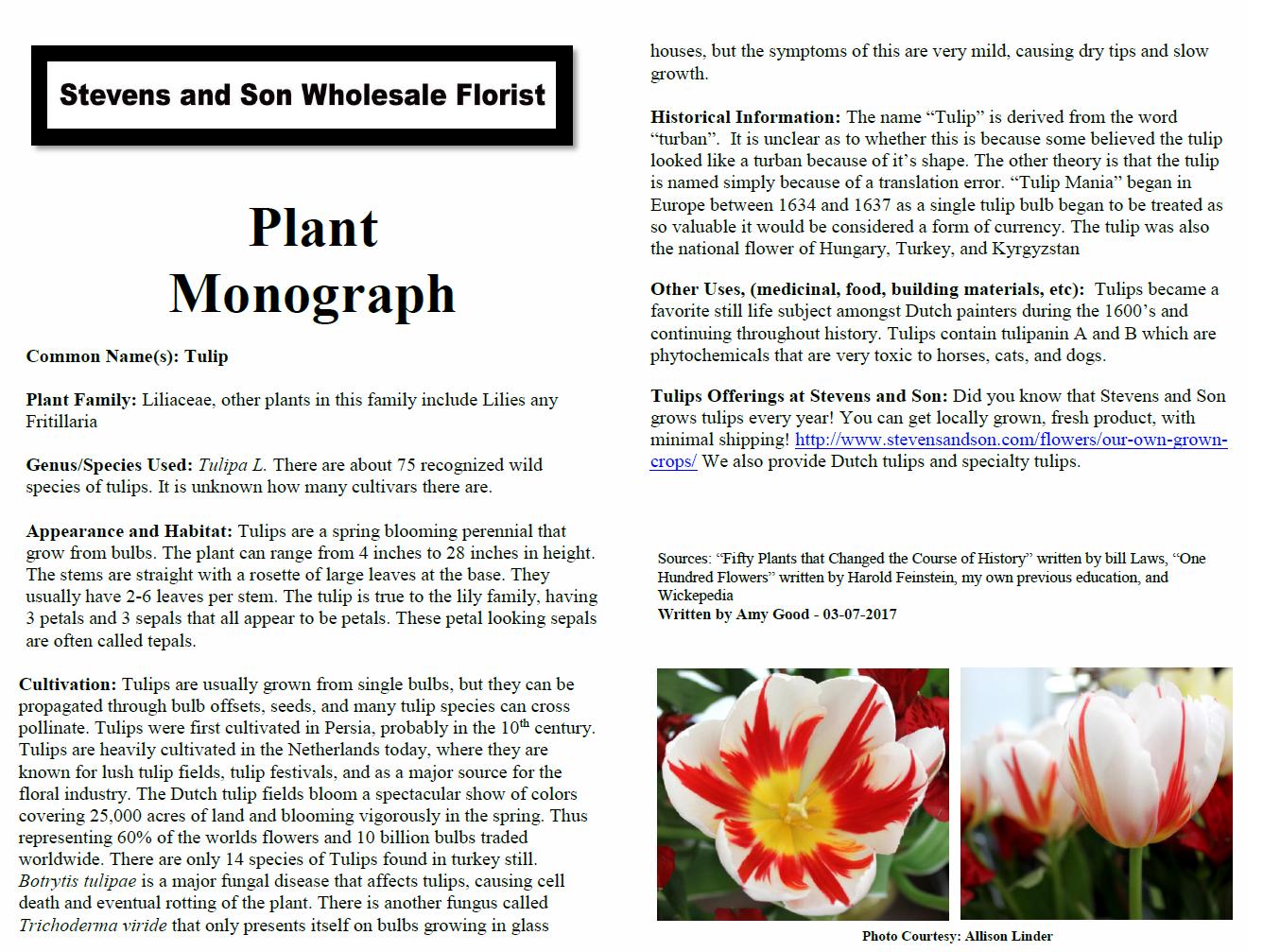 Tulip Plant Monograph