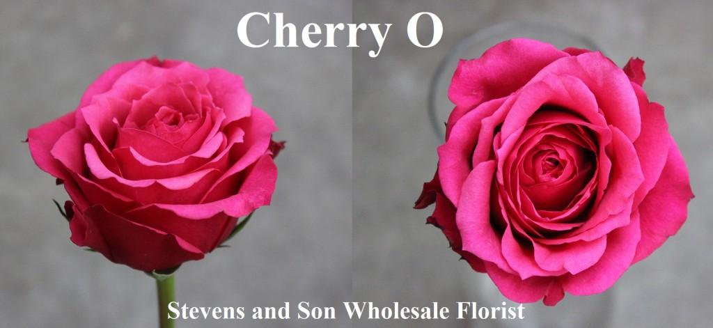 Cherry O, Photo Credit Allison Linder