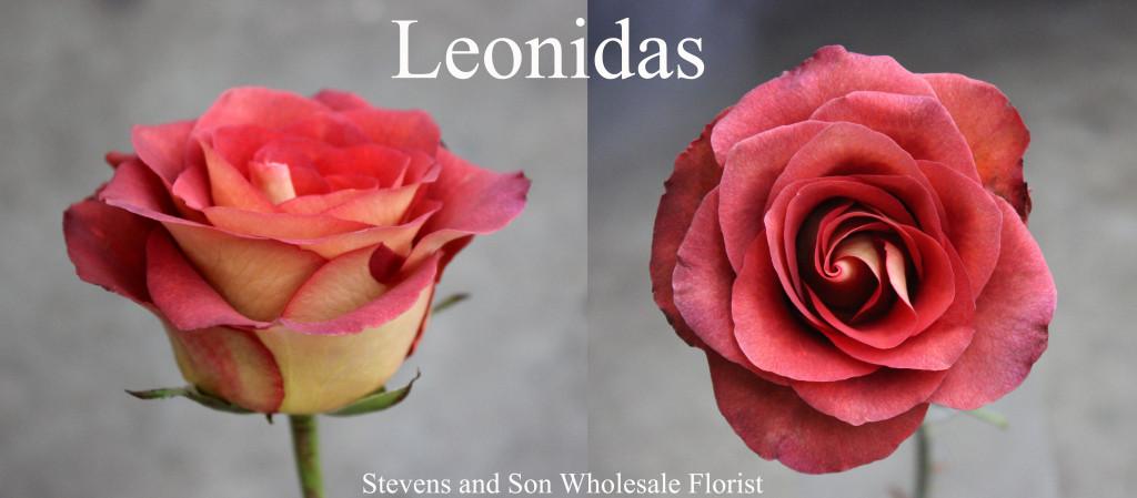 Leonidas - Photo Credit Allison Linder