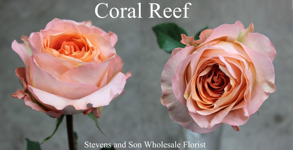 Coral Reef - Photo Credit Allison Linder copy