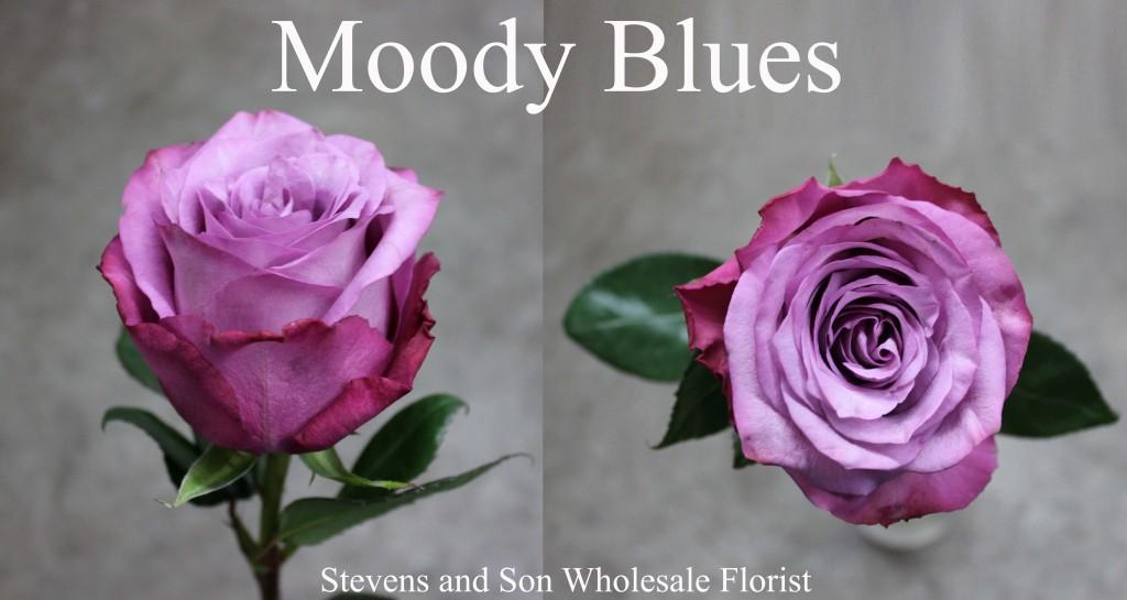 Moody Blues - Photo Credit Allison Linder