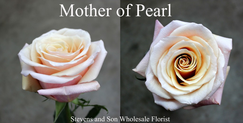 Mother of Pearl - Photo Credit Allison Linder