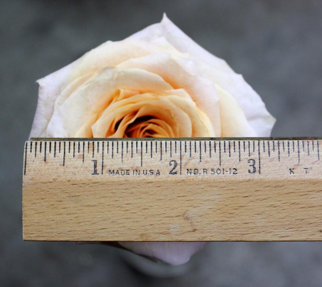 Shimmer - Measured - Photo Credit Allison Linder