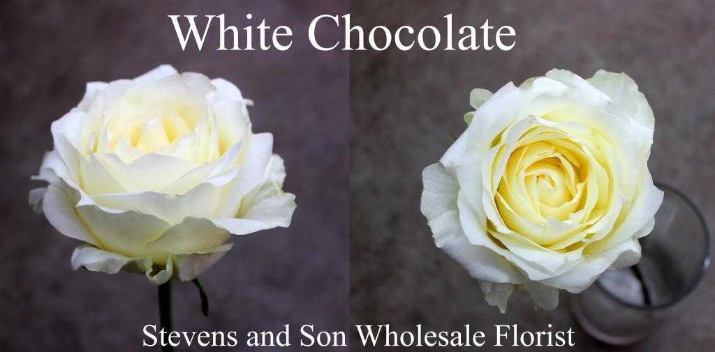 White Chocolate - Photo Credit Allison Linder