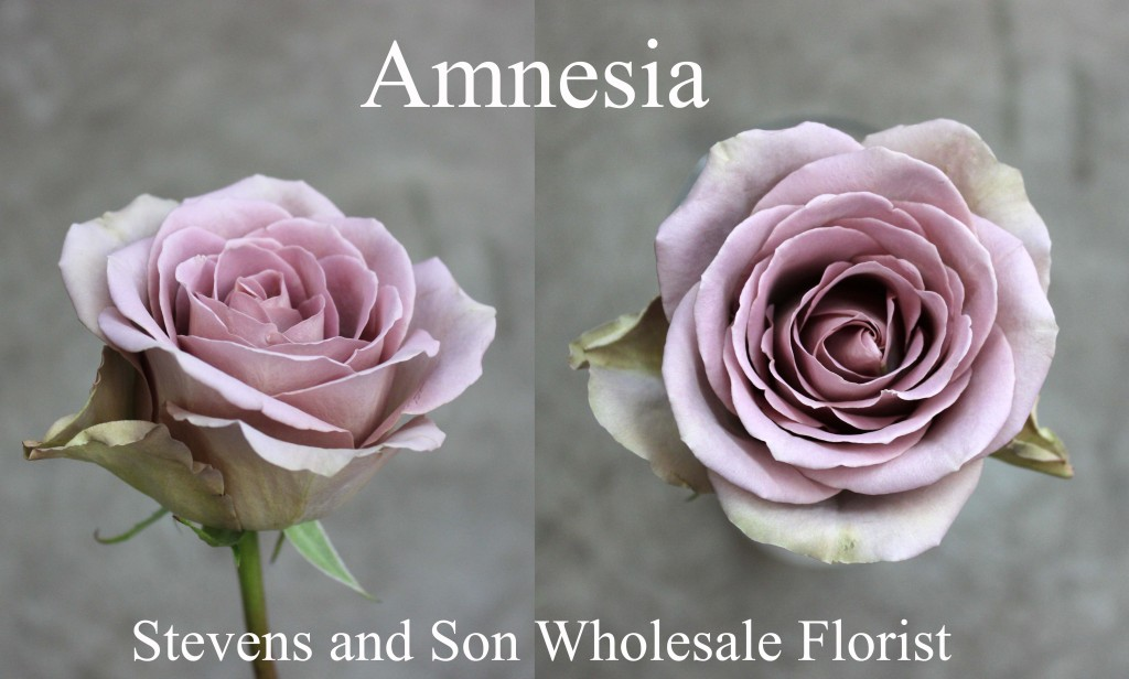 Amnesia - Photo Credit Allison Linder