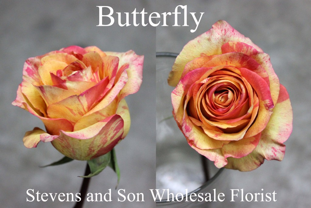 Butterfly - Photo Credit Allison Linder