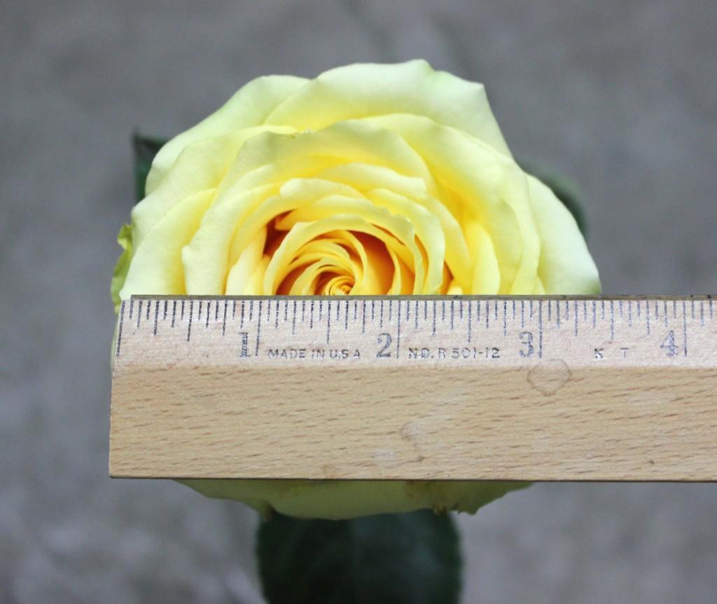 Butterscotch - Measured - Photo Credit Allison Linder
