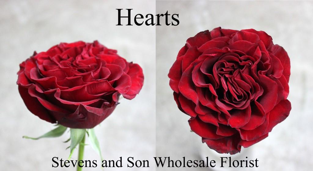 Hearts - Photo Credit Allison Linder copy
