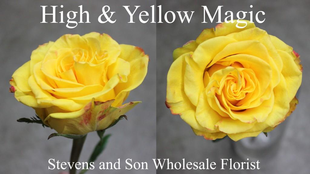 High & Yellow Magic - Photo Credit Allison Linder