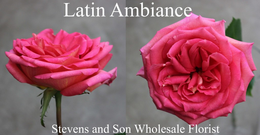 Latin Ambiance - Photo Credit Allison Linder