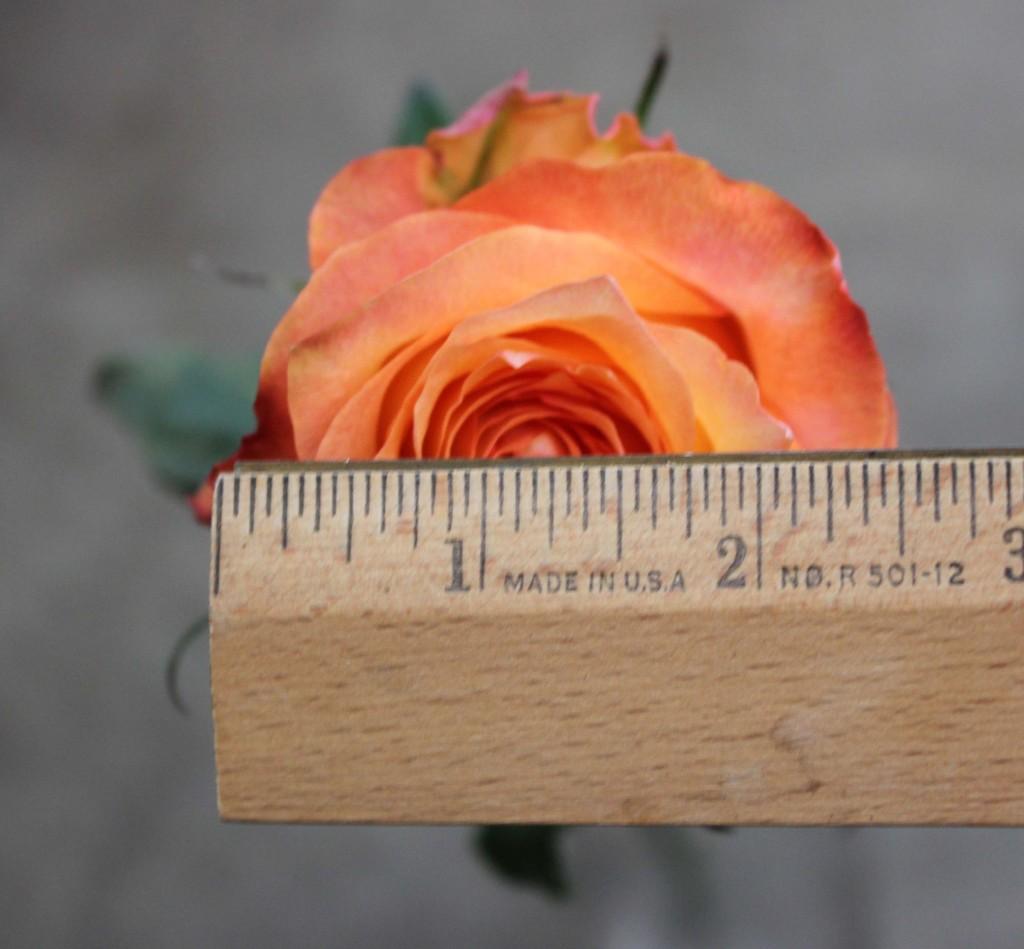 Twilight - Measured - Photo Credit Allison Linder