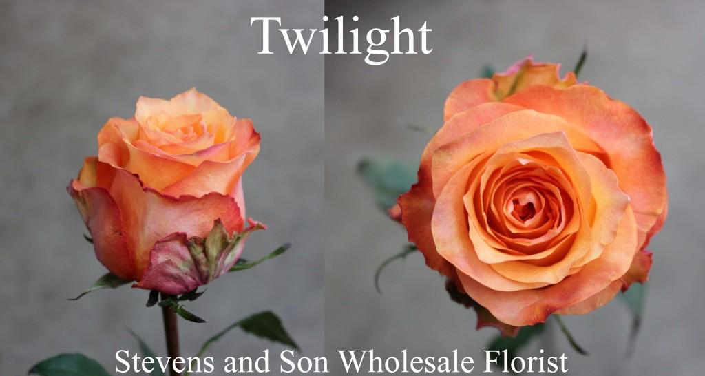 Twilight - Photo Credit Allison Linder