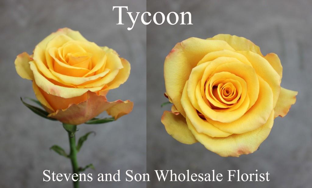 Tycoon - Photo Credit Allison Linder