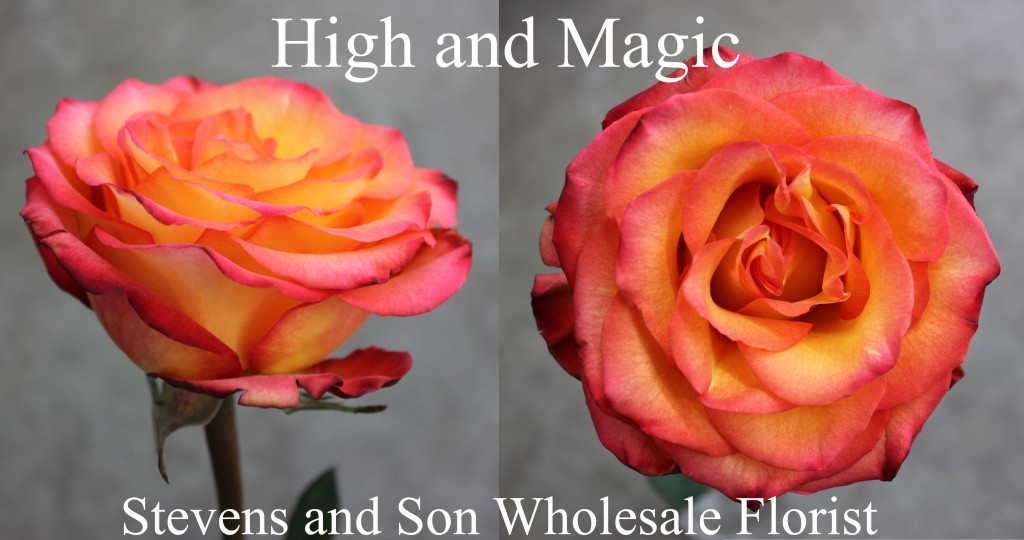 High and Magic - Photo Credit Allison Linder