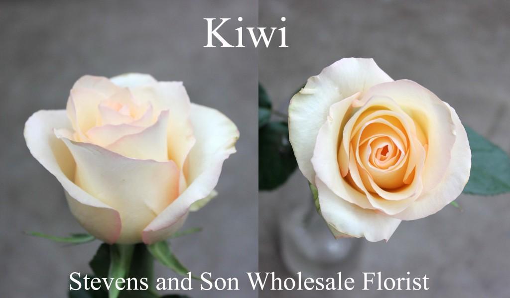 Kiwi - Photo Credit Allison Linder