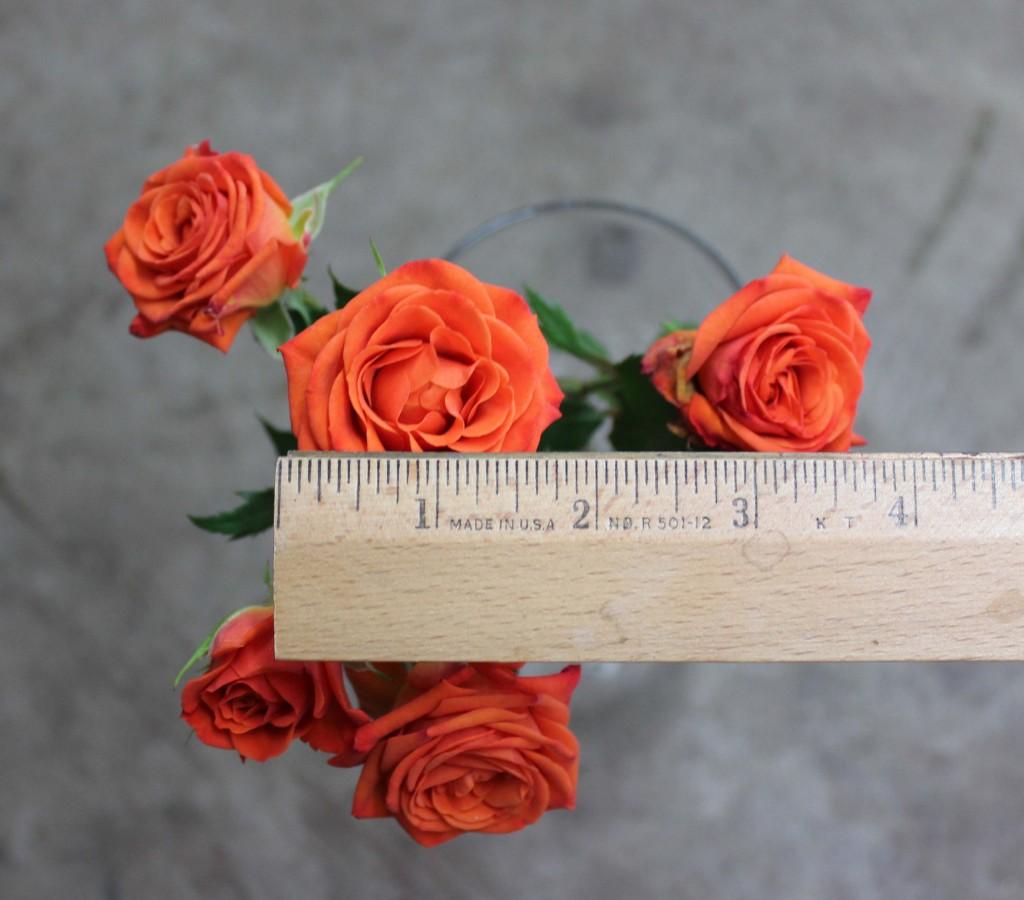 Neo Orange - Measured - Photo Credit Allison Linder
