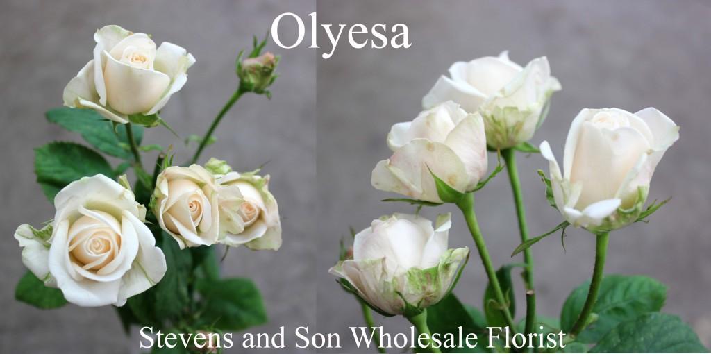 Olyesa - Photo Credit Allison Linder