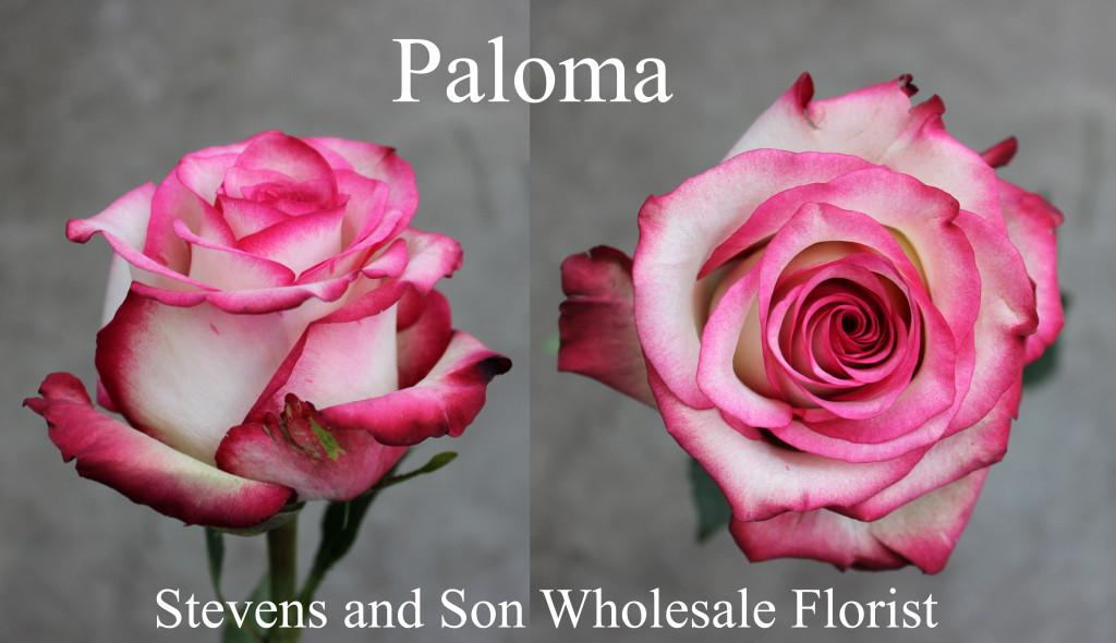 Paloma - Photo credit Allison Linder