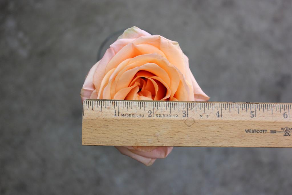 Tiffani - Measured - Photo Credit Allison Linder