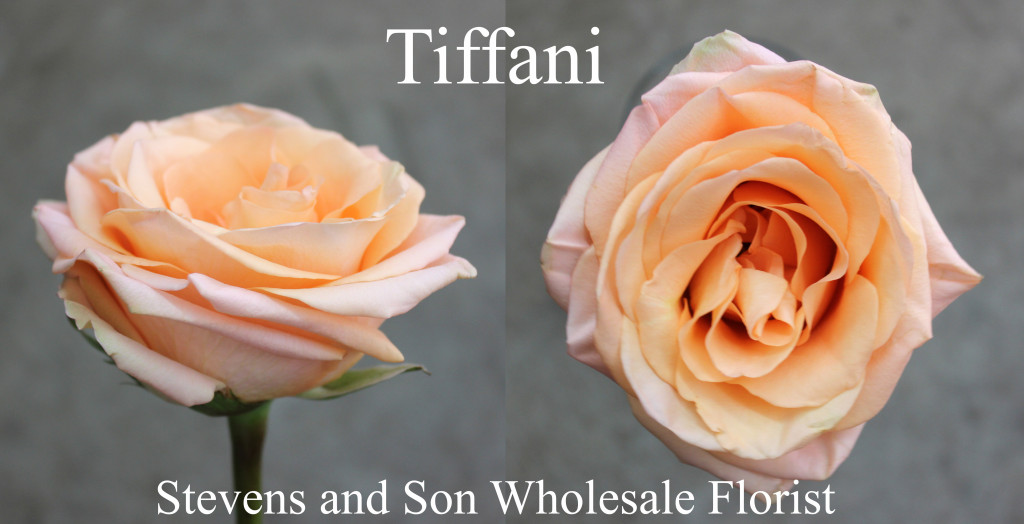 Tiffani - Photo Credit Allison Linder