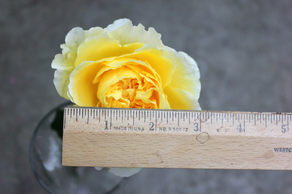 Beatrice - Measured - Photo Credit Allison Linder