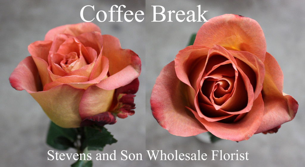 Coffee Break - Photo Credit Allison Linder