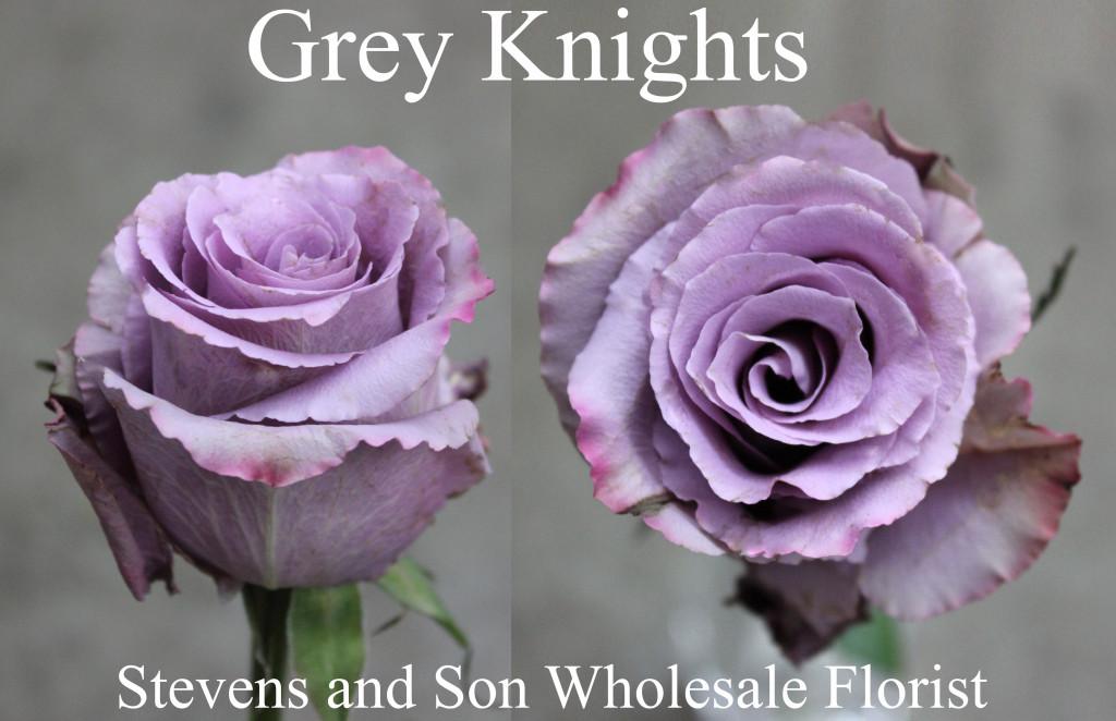 Grey Knights - Photo Credit Allison Linder