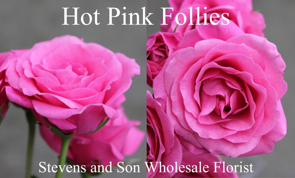 Hot Pink Follies - Photo Credit Allison Linder