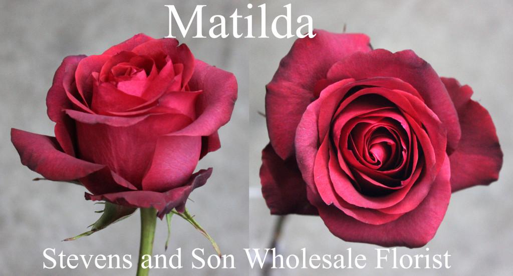 Matilda - Photo Credit Allison Linder