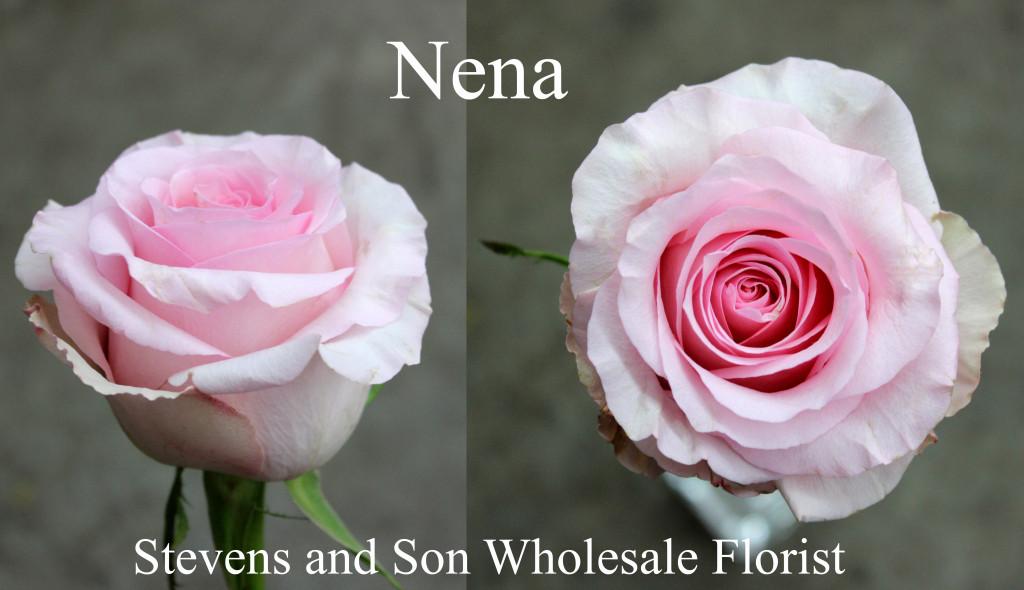 Nena - Photo Credit Allison Linder