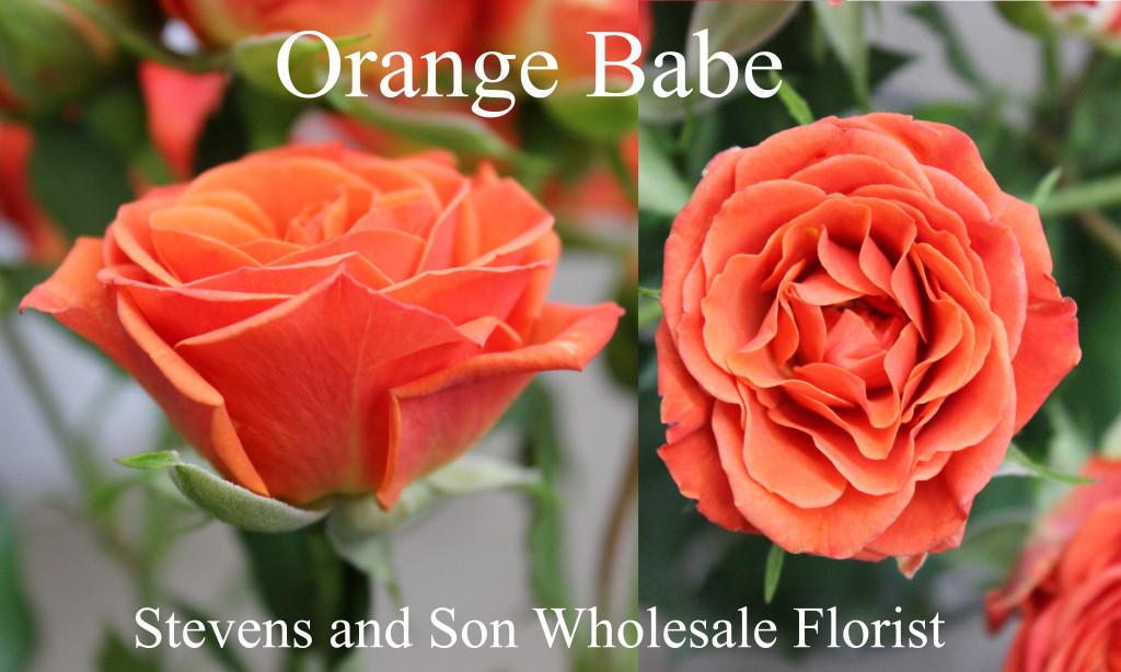 Orange Babe - Photo Credit Allison Linder