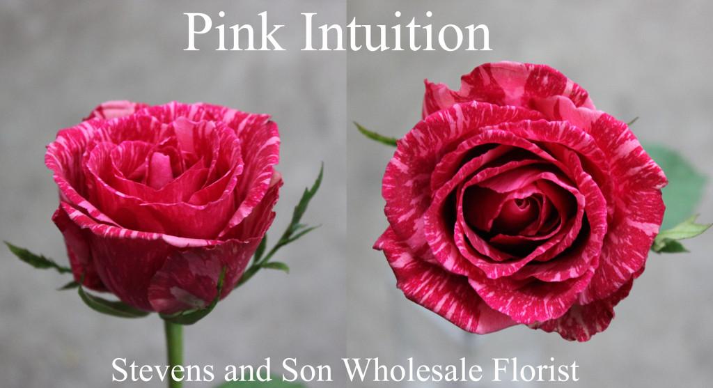 Pink Intuition - Photo Credit Allison Linder