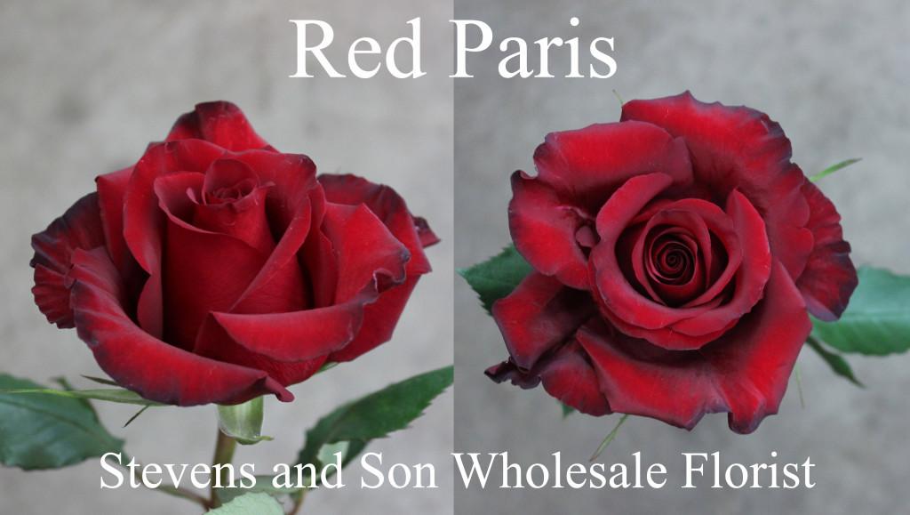 Red Paris - Photo Credit Allison Linder