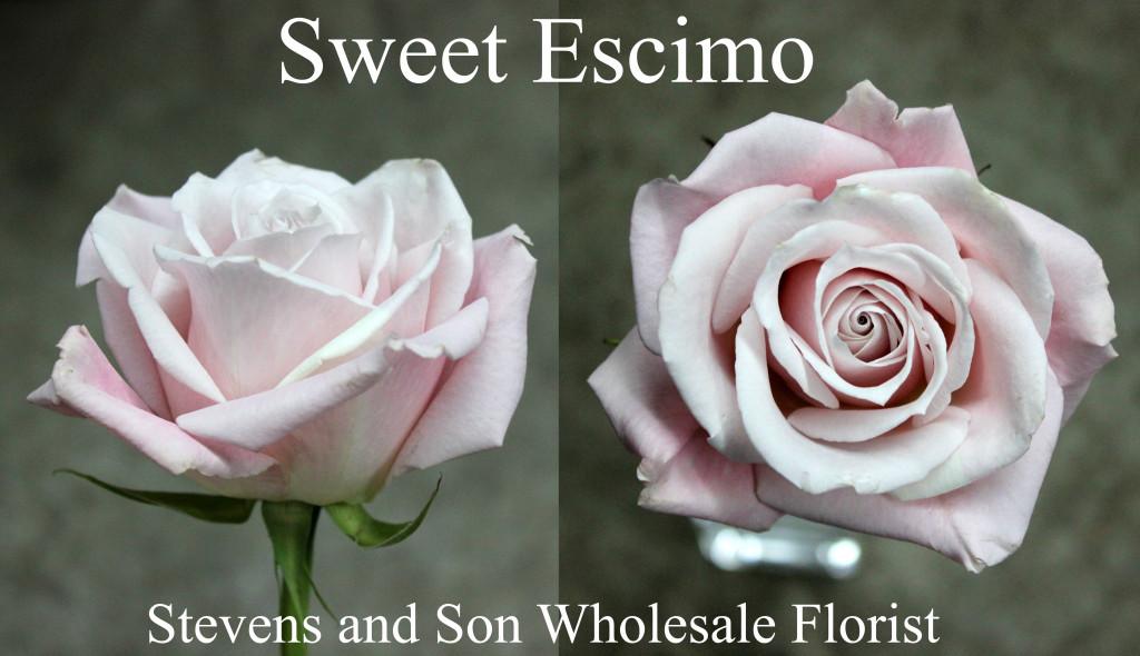 Sweet Escimo - Photo credit Allison Linder