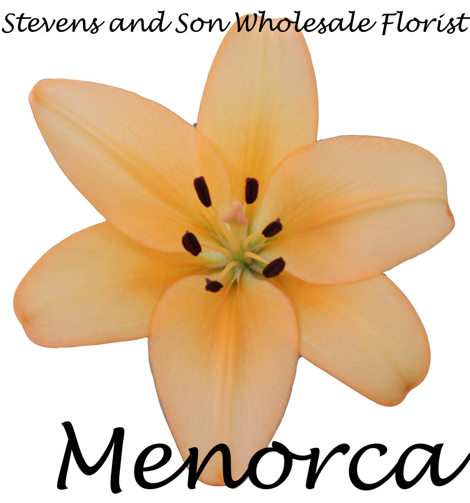 Asiatic Lily - Menorca - Photo credit Allison Linder