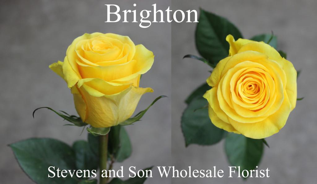 Brighton - Photo Credit Allison Linder