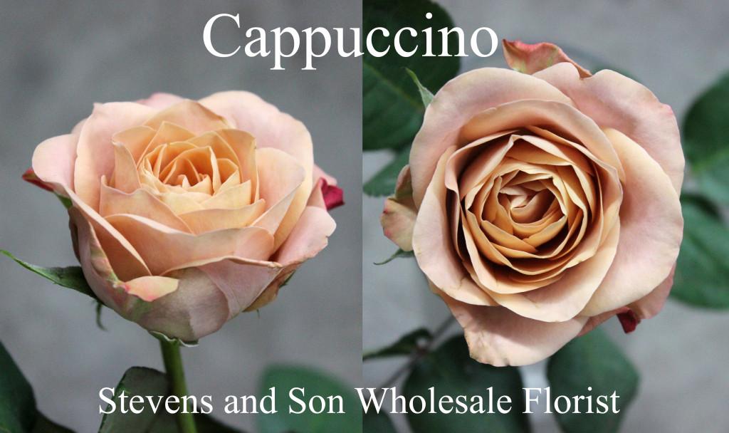 Cappuccino - Photo Credit Allison Linder