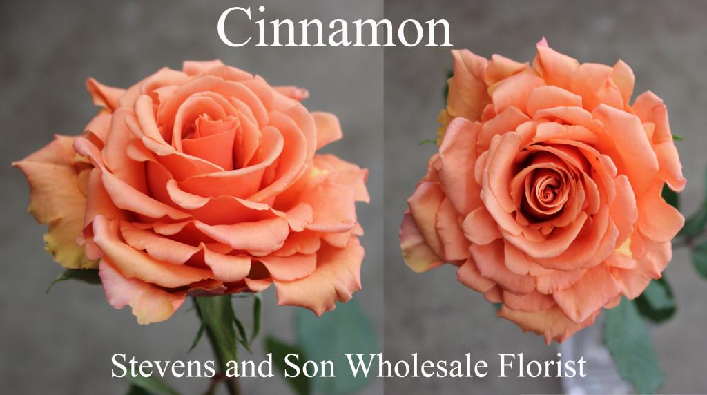 Cinnamon - Photo Credit Allison Linder
