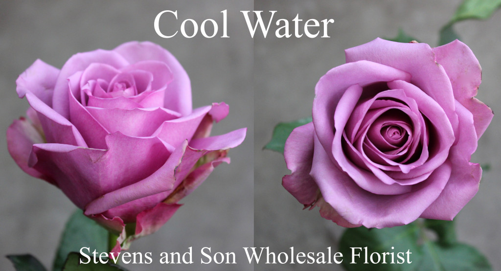 Cool Water - Photo Credit Allison Linder