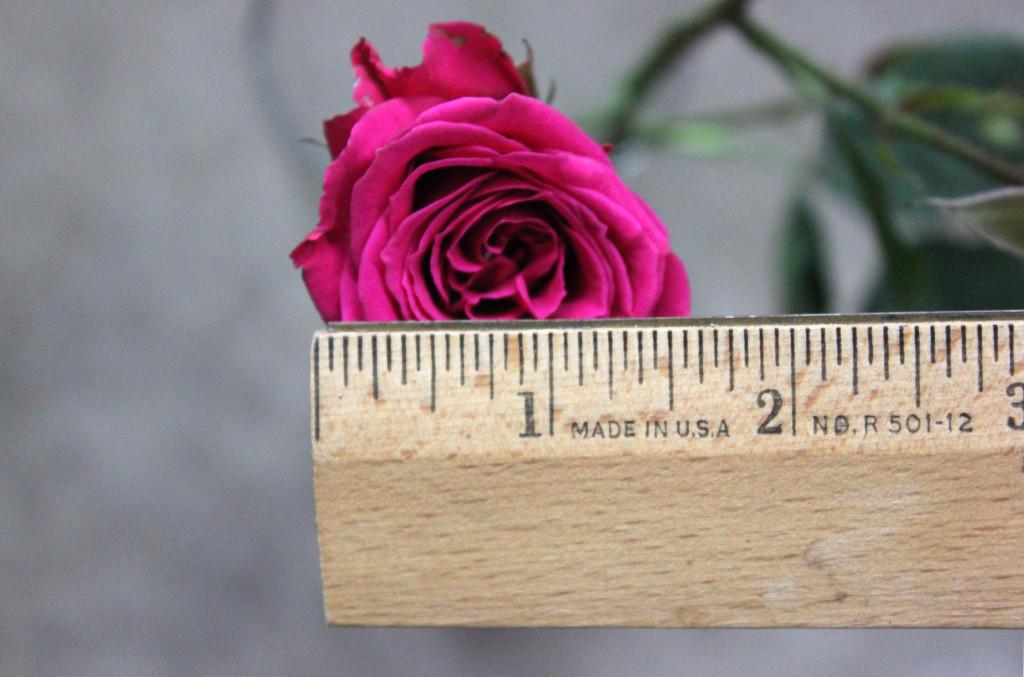 Lovely Lydia - Measured - Photo credit Allison Linder